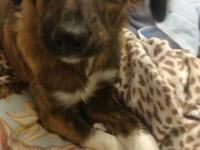 Bogey comes to LWDR via a Texas shelter.  Bogey, is a