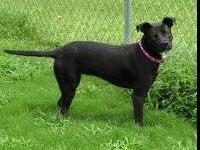 Terrier - Mochie-rescued In Marshall County - Medium -