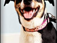 Terrier - Pepper - Medium - Adult - Female - Dog Pepper