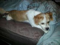 Terrier - Peyton - Small - Young - Male - Dog Look at