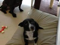 Terrier - Polly - Medium - Young - Female - Dog Fun