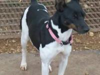 Terrier - Precious - Small - Young - Female - Dog Dec