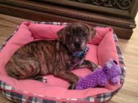 I have a 6 month old brindle puppy.. She is spayed with