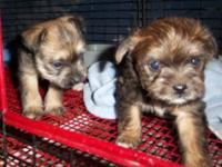 I have two beautiful infant terriers, one male, one