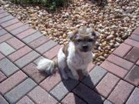 Terrier - Rascal - Small - Adult - Male - Dog Rascal is