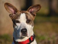 Terrier - Roseanna - Medium - Young - Female - Dog