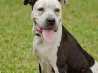 Terrier - Sarah The Smiling Terrier Mix - Large - Adult