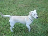 Terrier - Scout - Medium - Young - Male - Dog My name
