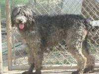 Terrier - Serena - Medium - Young - Female - Dog