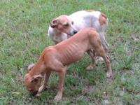 Terrier - Sister & Sister - Medium - Young - Female -