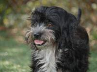 Terrier - Sparkle - Small - Adult - Female - Dog And
