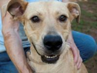 Terrier - Tashi - Large - Young - Female - Dog I am a