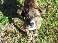 Terrier - Theta - Medium - Young - Female - Dog Theta