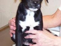 Terrier - Vanna - Medium - Baby - Female - Dog Not sure