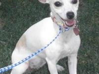 Terrier - Virginia - Small - Young - Female - Dog