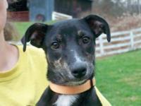 Terrier - Zero - Medium - Young - Female - Dog