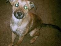 Terrier - Zeus - Medium - Adult - Male - Dog I may look