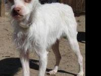 Terrier - Dolly - Medium - Young - Female - Dog Dolly