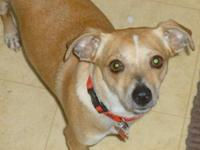 Terrier - Kayla-super Sweet - Small - Young - Female -