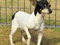 Terrier - Liza - Small - Adult - Female - Dog Hi my