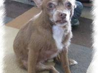 Terrier - Penny - Small - Senior - Female - Dog I have