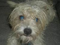Terrier - Scruffy - Small - Young - Male - Dog I am