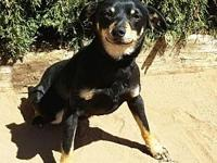 Terrific LITTLE Tude ~ Chiweenie's story Sweet LITTLE