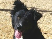 Tesla is an active border collie mix about 6 months