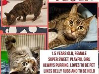 Tesla's story 1.5 years old, very affectionate,