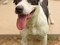 Tess's story Meet Tess! Tess is a female, 3.5 year old,