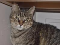 Tessa is a senior girl who has been at the shelter for