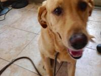Hey yall!  My name is Tex. Im a 3 year old yellow lab