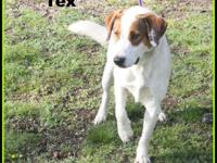 1803067 - Tex - adult mixed breed dog approx 3 yrs