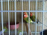 I have at 3 lovebirds peach face for sale I'm not at
