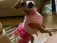 The Girl in a Pink Tutu....'s story Absolutely adorable