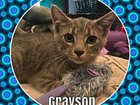 The Gray Matter Litter-Grayson's story Please contact