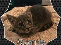 The Gray Matter Litter-Stormie's story Please contact