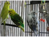 The Parakeet Five are an adorable little group of happy