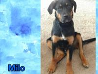 Max, Marley, and Milo are 3 male 5 month old