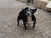 THELMA's story THELMA Female Spayed CHIHUAHUA