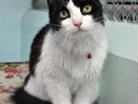 Thelma's story Stroke her and hear her purr. Not only