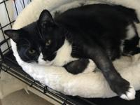 THELMA is a sweet 2 year old tuxedo girl who has been