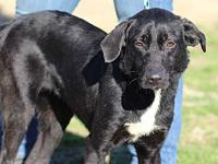 THELMA LOU's story MEET THELMA LOU! A 1-2 year old,