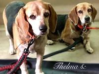 Thelma & Louise's story Thelma and Louise are a bonded