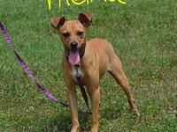 Thelma's story Thelma is a smart loving playful puppy