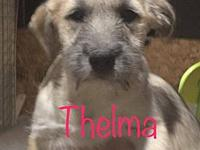 Thelma's story Louise is currently with her foster