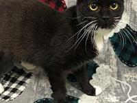 My story Theodora is a sweet little tuxie girl who came