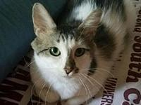 Theresa's story Theresa is a stray who was found with