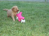 We have three puppies left. They are AKC, papered,