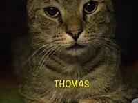 Thomas's story Thomas and Ziggy were picked up about a